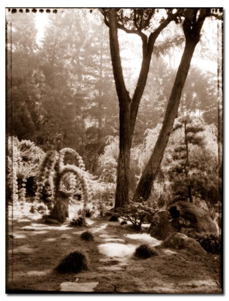 japanlitetree2